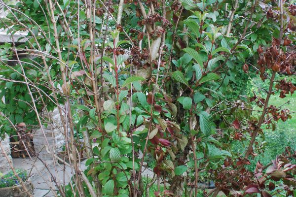 Biosecurity – Protecting your shrubs and trees
